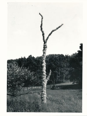 Aktion bei Dolgelin (Seeloer Höhen), 1989, Objekt Holz, Stroh