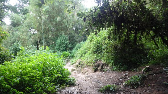 Mission Kongo e.V. -  Waldgebiet in Süd-Kivu