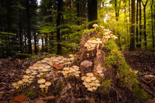 Pilztreffen im Naturpark Altmühltal