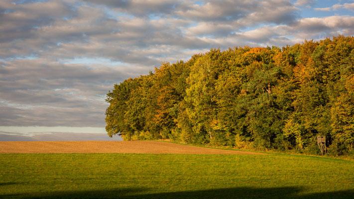Herbst PUR bei Neuburg an der Donau