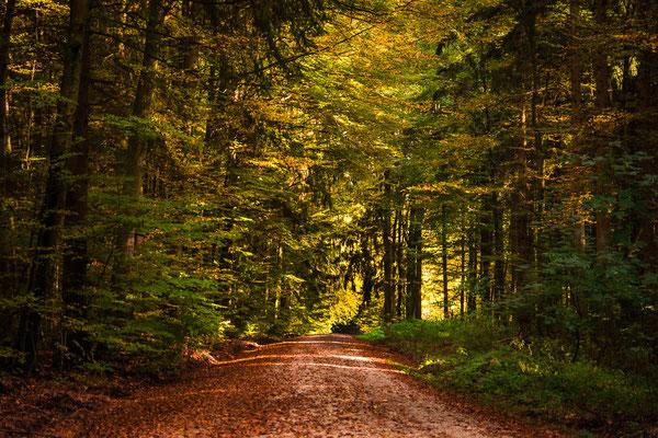 Tolle Waldspaziergänge im Naturpark Altmühltal