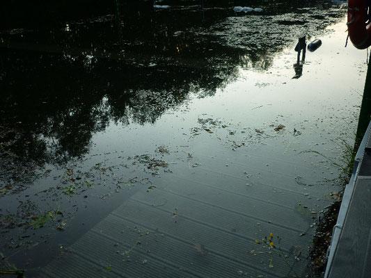 Im Hafen ist eine dreckige Brühe angeschwemmt worden