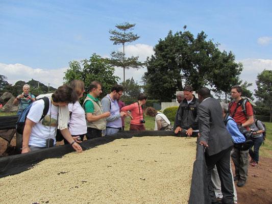 Besichtigung der Tchibo-Kaffeefarm: Trocknungstische fuer geschaelte Kaffeebohnen.