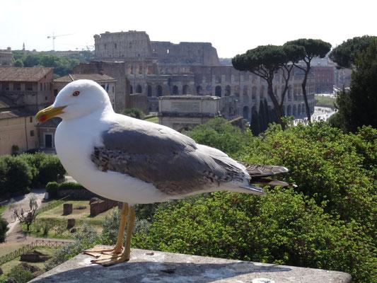 Möwe im antiken Rom.
