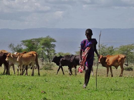 Massai-Hirtenjunge mit Herde.