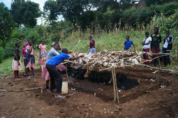 Schutz vor zu intensiver Sonne und Bewässerung der Jungpflanzen ist absolut notwendig für den Erfolg des Projektes.