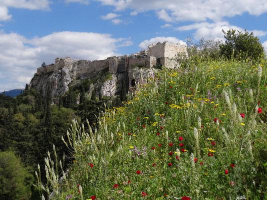 Westblick auf die Akropolis.
