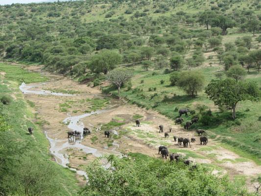 Elefantenfamilie am Tarangirefluss im gleichnamigen Nationalpark.