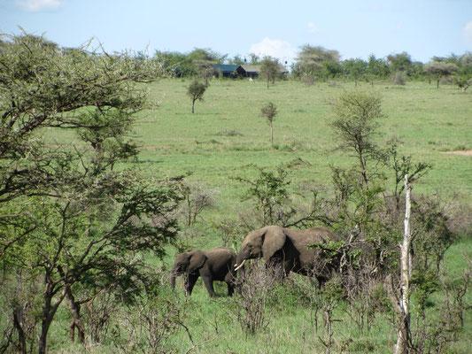 Rund um unser Zeltcamp waren viele Tiere zu beobachten, zum Teil vom Esstisch aus: im Hintergrund sieht man die Zelte unseres Camps.