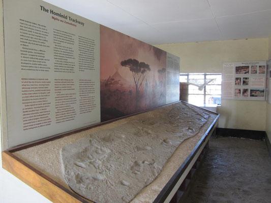 Ein Abguss der weltberühmten Fußspuren von Laetoli, dem Beweiß aufrechten Gehens bei den Vormenschen Australopithecus afarensis vor 3,6 Millionen Jahren.