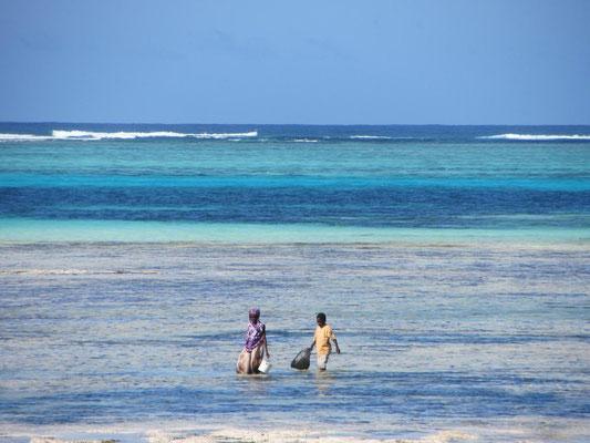 Sansibar: Bei Ebbe sammeln Kinder im flachen Wasser Meeresfrüchte.