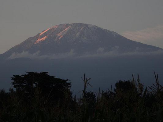 Kilimandscharo im letzten Tageslicht.