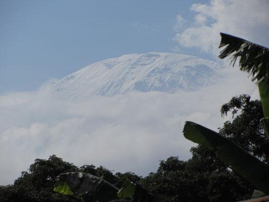 Der Kilimandscharu läßt sich in dieser Jahreszeit nur selten blicken. Meist ist er von Wolken eingehüllt.