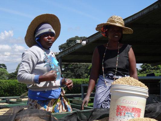 Arbeiterinnen der Bio-Kaffeeplantage.