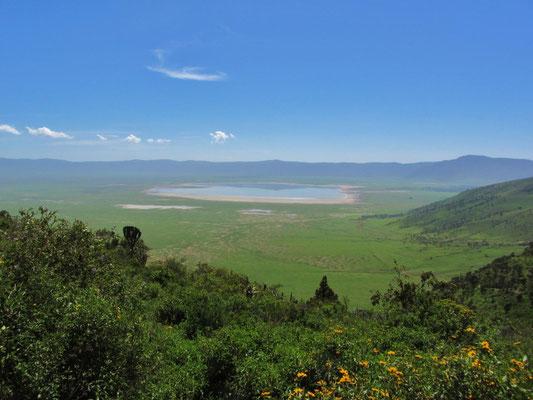 Blick auf die Ebene im Ngorongorokrater. Im Gegensatz zu bisherigen Besuchen im Juli ist die Kraterebene völlig grün.