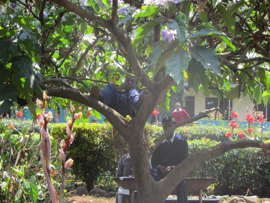 Ein beliebter Platz: der Schatten eines Baums vor der Versammlungshalle und die dort plazierte Sitzgruppe.