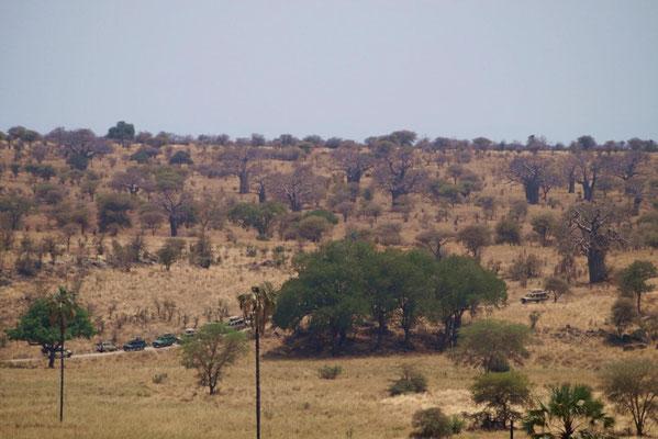 Der Gepard war die Attraktion und schnell sammelten sich viele Beobachter.