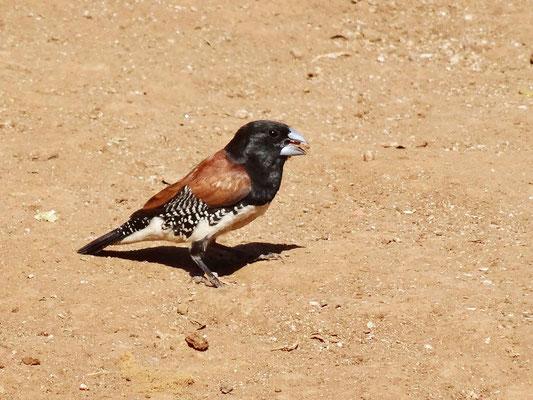 Einer der zahlreichen Vögel auf dem Schulgelände.