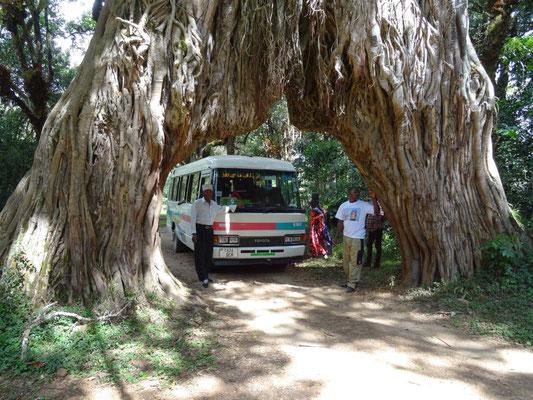 Unser Fahrer und Joseph Odilo Minde mit dem Coaster-Bus: passt er durch?
