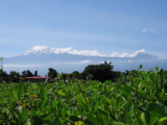 Hauptgipfel des Kilimandscharo und Mawenzi (rechts).