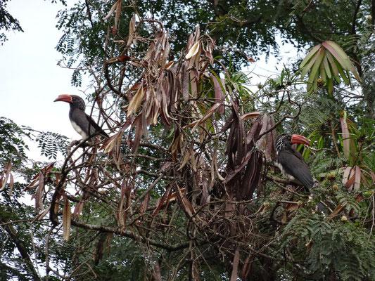 Das Schulgelaende wird von vielen Voegeln besucht, da es eine reichhaltige Vegetation zu bieten hat..