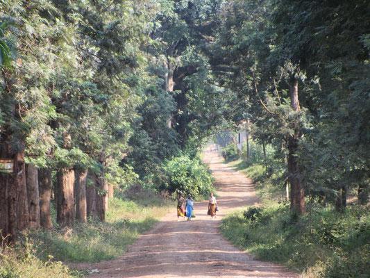 Eine Straße in einer Kaffeeplantage bei Moshi.