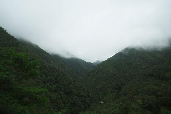 fahrt in den nebelwald