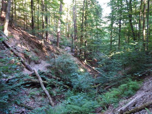 """""""Urwald"""" Mountainbike Trail"""