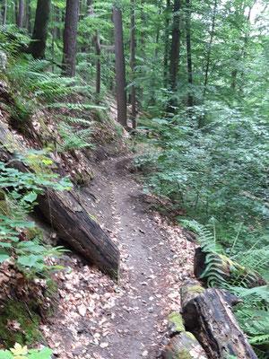 Singletrails im Steigerwald
