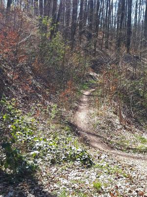 Trail zum Zabelstein
