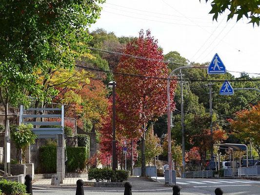 集合場所のアメリカンフー紅葉が始まる。