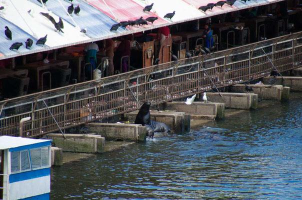 Der Fischmarkt... Hier gibt es für die Seelöwen eine schnelle Mahlzeit