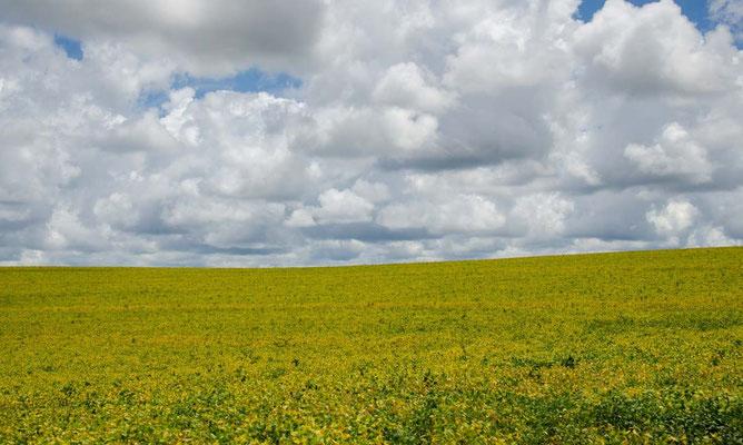 ...vorbei an endlosen Sojafeldern