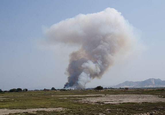 Zuckerrohrfelder weden abgebrannt