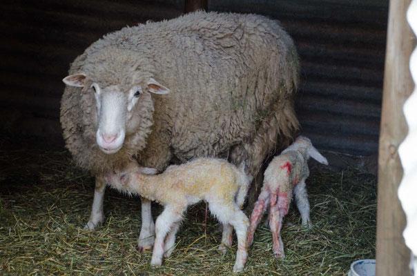 Gerade geboren Christa und Peter