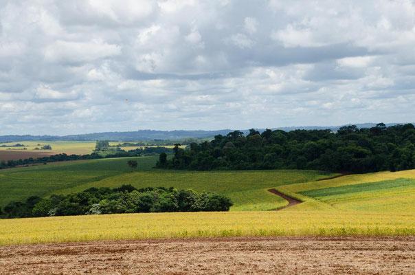 ...durch landwirtschaftliche Anbauflächen....