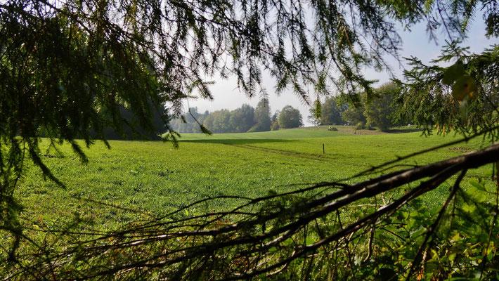 Vue de mon sapin, Entre deux bois, Sapins Lonchampt, 25330  Amathay-Vésigneux, Doubs, Franche-Comté, F,