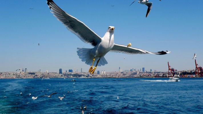 Mouette,Bateau Istambul-Burgazada,  Istambul , Turkey, T,   P1070286.JPG.jpg