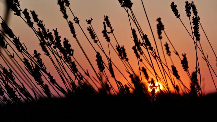 Sunset lavandes, Tourtour, Var, F,