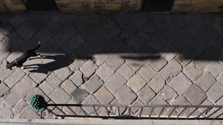 Chien, rue pavée, Palazzo Conte federico, Palerme, Sicile, Italie, It,