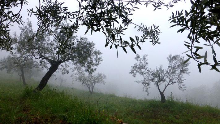 Brouillard, Les Adrechs, Ampus,  F, Sunset Falaises,