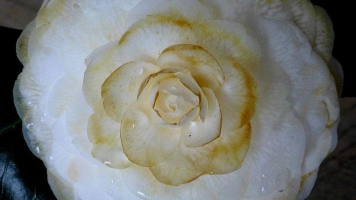 Fleur, Neige, chez Mâ, Paris, F,  P1000688