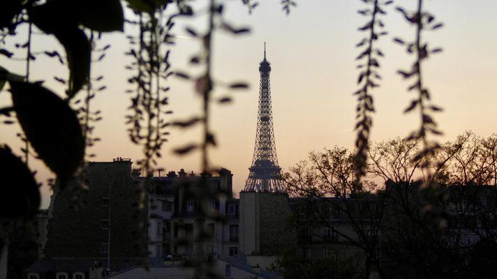 Sunset, Tour Eiffel, glycine, chez Mâ , Bourgogne 75007 Paris, F,