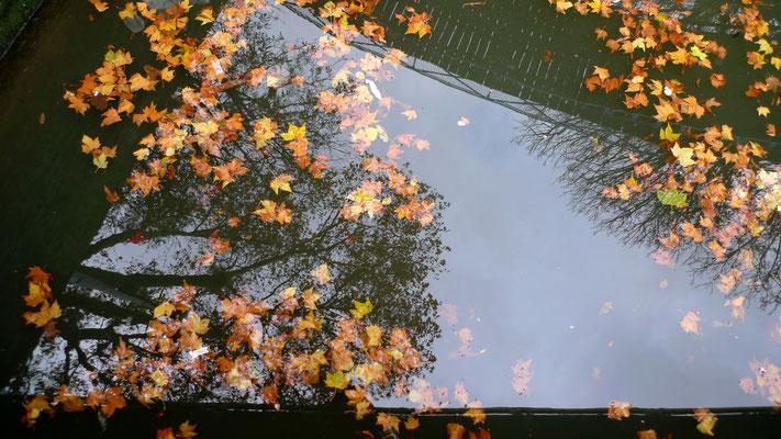 Feuilles, canal Saint Martin, Paris, F,  P1150174.JPG