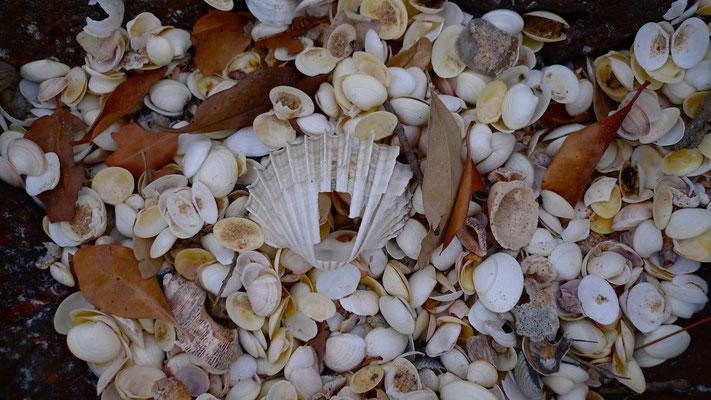 Coquillages, plage, Hôtel Baobab, La Somone, Sn,  P1050124.JPG.jpg