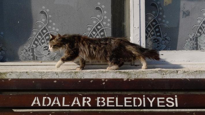 Chat, Burgazada Island,  Turkey, TK,  P1070471.JPG