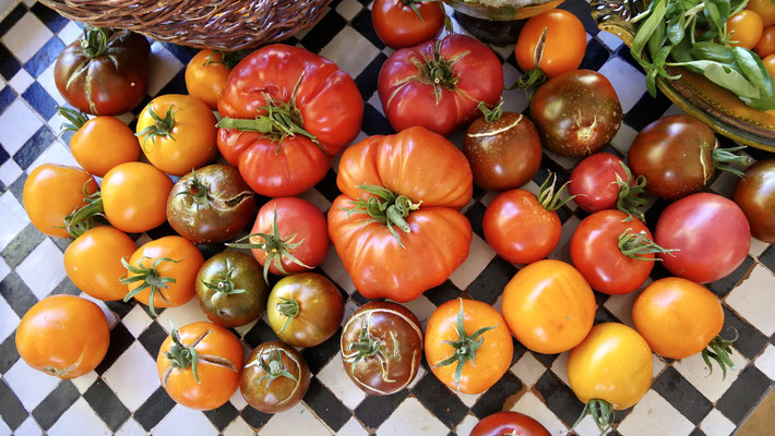 Tomates, les Adrechs, Ampus, F,