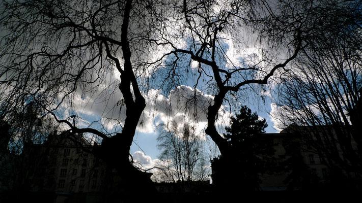 Ciel, Parc Villemin, Paris, F,  P1010777.JPG