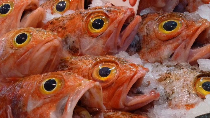 Poissons, fish market, Sydney, Australie, Aus, P1020889.JPG