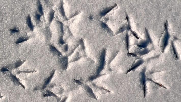 Empreintes, neige, Canal St Martin, Paris, F, P1010696.JPG